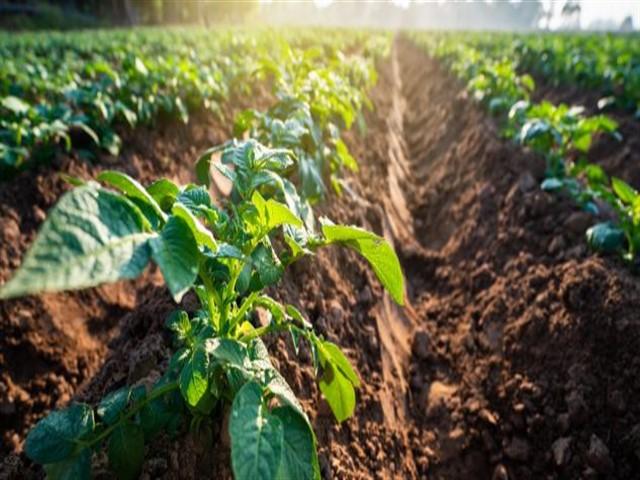 Bando pubblico Pacchetto Giovani - Ed. 2019, Sostegno agli investimenti nelle aziende agricole